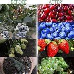 eclairage pour plante TOP 6 image 2 produit