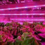eclairage pour plante TOP 8 image 4 produit