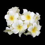 LEDMOMO Guirlande Lumineuse LED à Piles 20 LED Fleur Frangipanier Plumeria Décoration (Lumière Blanche Chaude) de la marque LEDMOMO image 1 produit